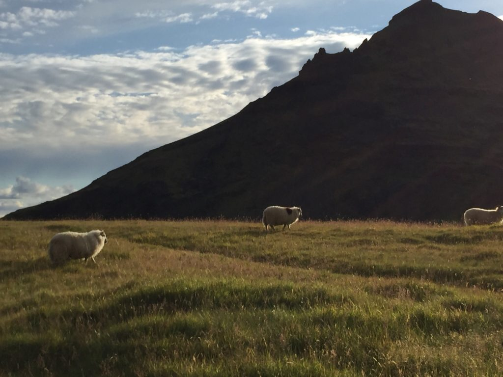 Iceland:  Our Summer of Wedded Bliss